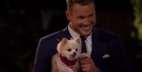 Colton Puppy.png
